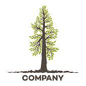 Tree sequoia logo