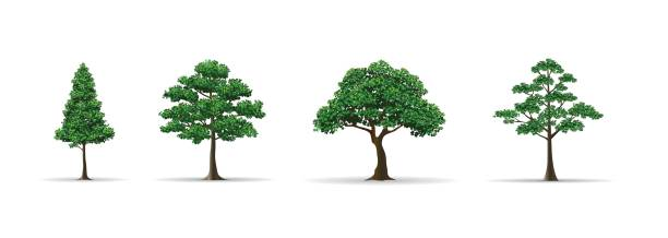42 Cartoon Of Yew Tree Illustrations Royalty Free Vector Graphics Clip Art Istock These branches are nice, but to make them even more realistic you can cover them with leaves as. 42 cartoon of yew tree illustrations royalty free vector graphics clip art istock