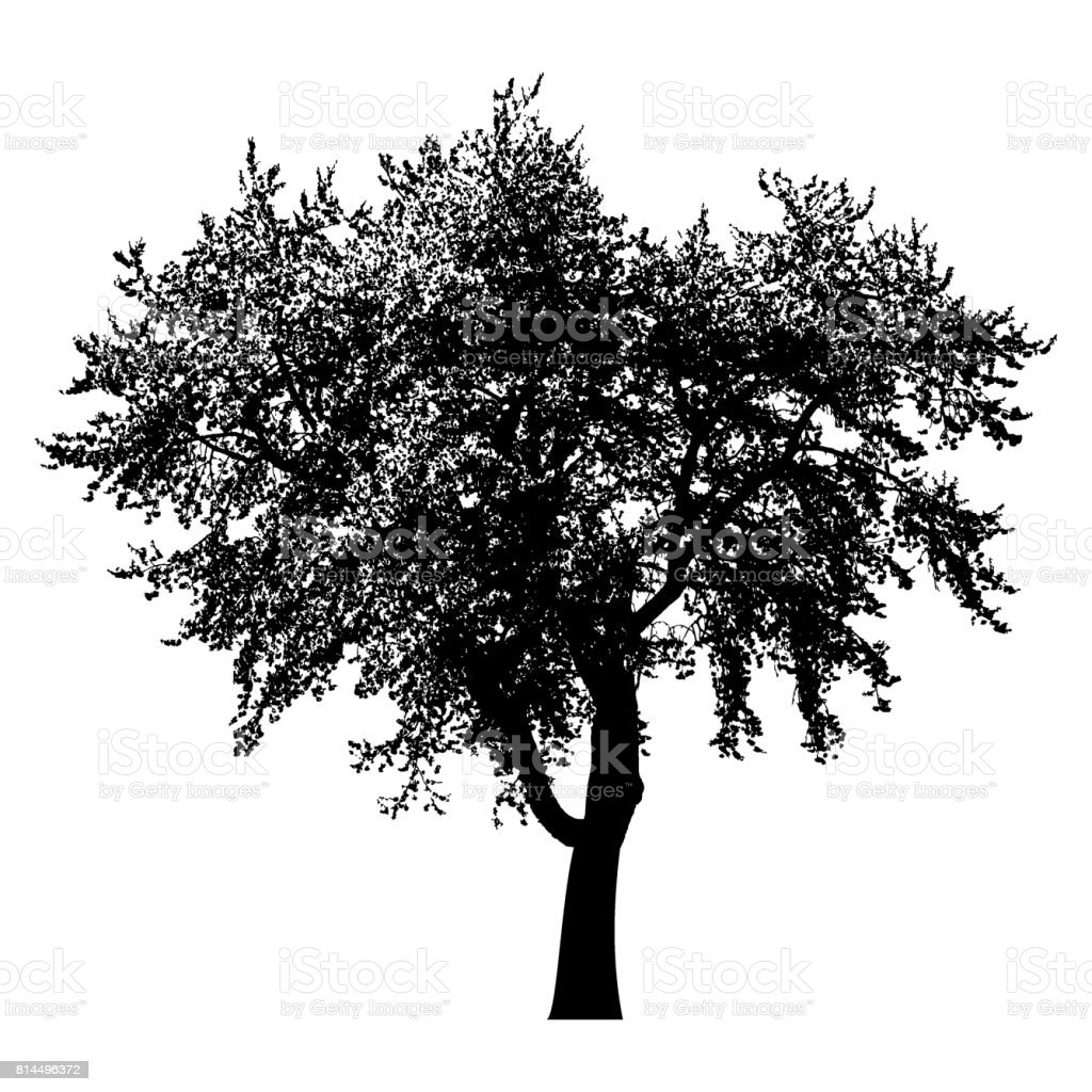 Baum Silhouette schwarz isoliert vector art illustration