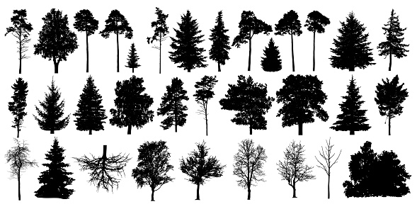 Tree silhouette black vector. Isolated set forest trees on white background clipart