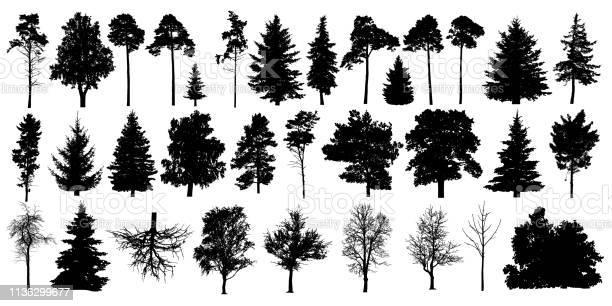 Tree silhouette black vector isolated set forest trees on white vector id1136299677?b=1&k=6&m=1136299677&s=612x612&h=gbm1qd4k20coacc0kqqv3ef2wrvmxtya6srxptqxgl0=
