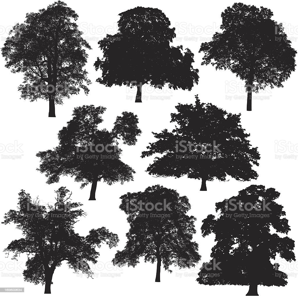 Tree silhouette collection vector art illustration