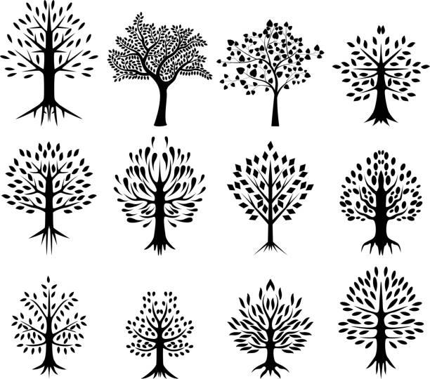baum silhouette kollektion - buchenholz stock-grafiken, -clipart, -cartoons und -symbole