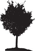 Tree silhouette on white background. Vector illustration