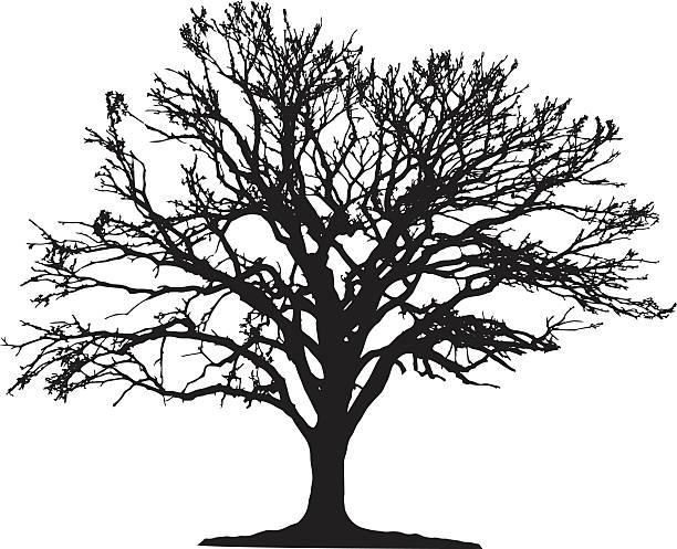 baum silhouette - winterruhe stock-grafiken, -clipart, -cartoons und -symbole