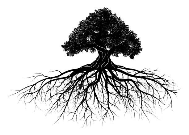 stockillustraties, clipart, cartoons en iconen met boom silhouet - wortel plantdeel