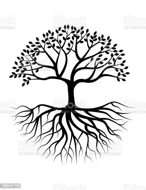Tree silhouette with root vector id959457700?b=1&k=6&m=959457700&s=612x612&h=axxn6dvt e7rehfxnkgdxsuv rcrkqpfskjrqspmk4g=