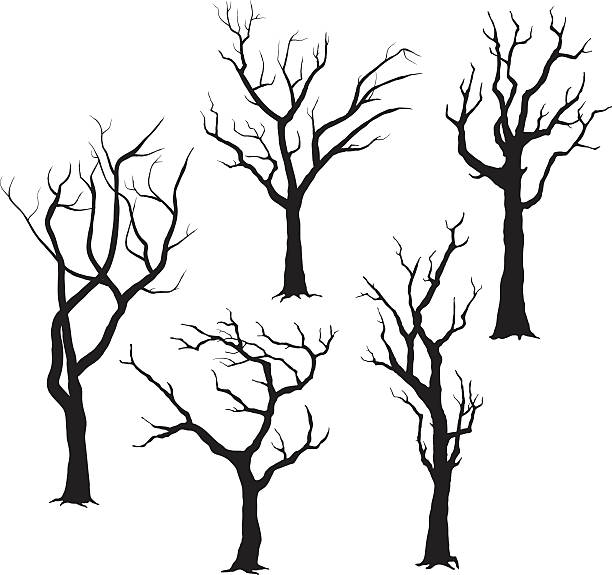 illustrations, cliparts, dessins animés et icônes de arbre silhouettes- illustration - arbre
