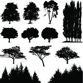 Highly detailed traces of various trees.