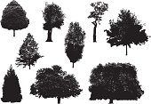 Vector illustrations of tree silhouettes.