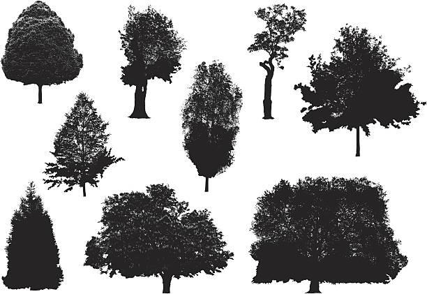 baum silhouetten - buchenholz stock-grafiken, -clipart, -cartoons und -symbole