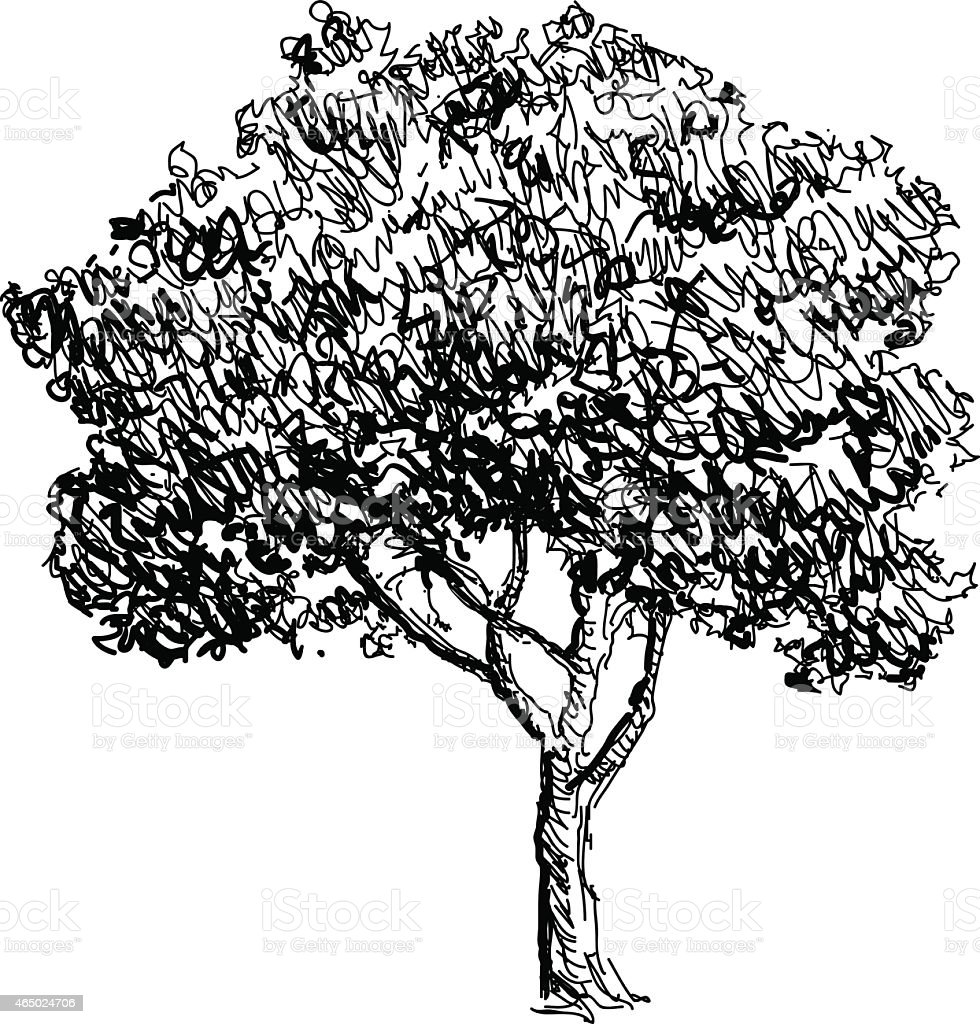 Tree Sketch Drawing Illustration Stock Illustration Download Image Now Istock
