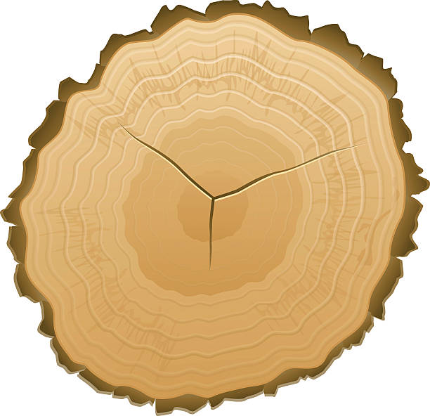 Tree Stump Clip Art, Vector Images & Illustrations - iStock