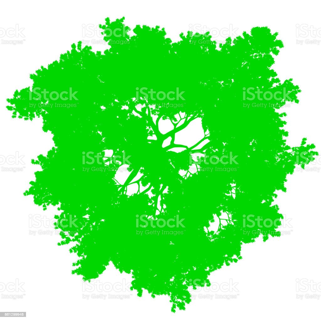 Tree Top View Silhouette Isolated Green Vector Stock
