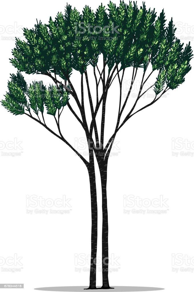 Tree vector by hand drawing. vector art illustration