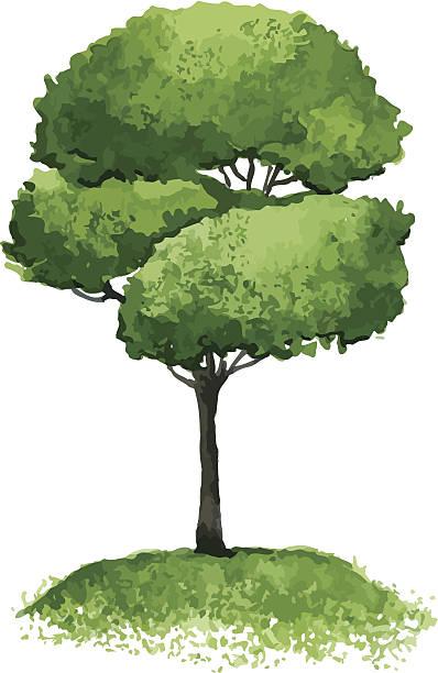 illustrazioni stock, clip art, cartoni animati e icone di tendenza di albero - mika