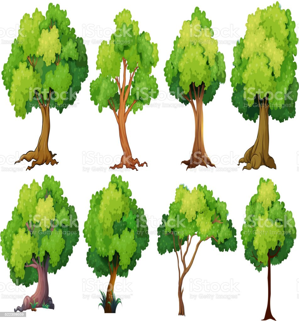 Tree – Vektorgrafik