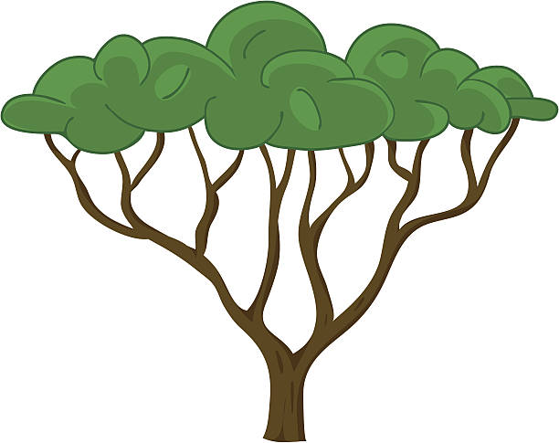African Tree Clip Art, Vector Images & Illustrations - iStock