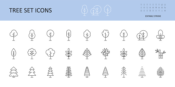 Tree vector set icons. Trees with crown, leaves, spruce, coniferous pine. Bushes linear icon editable stroke.
