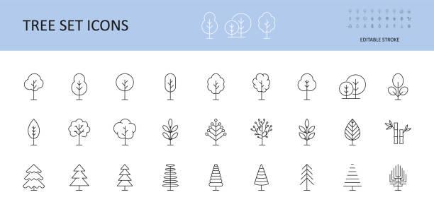 ilustraciones, imágenes clip art, dibujos animados e iconos de stock de iconos de conjunto de vectores de árbol. arboles con corona, hojas, abeto, pino conífera. arcos lineales icono trazo editable. - árbol