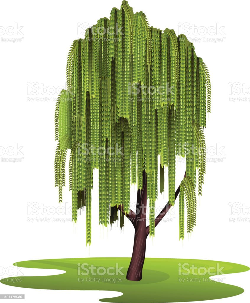 Tree weeping willow vector art illustration