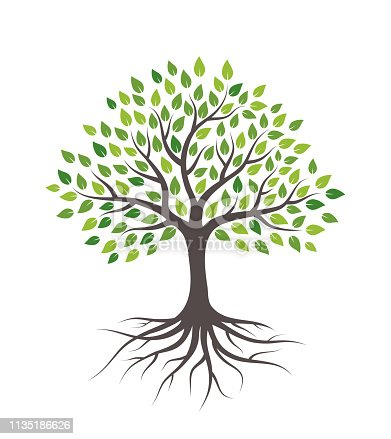 istock Tree with green leaves and roots. Isolated on white background. 1135186626