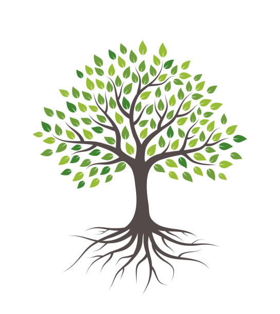 illustrazioni stock, clip art, cartoni animati e icone di tendenza di tree with green leaves and roots. isolated on white background. - radice