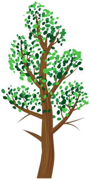 Tree with green leaves vector icon vector art illustration