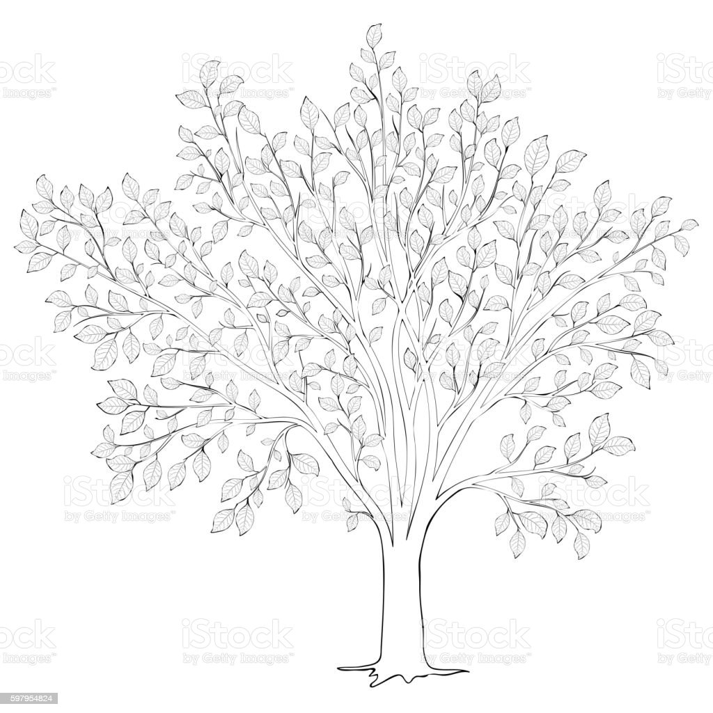 Tree With Leaves Silhouette Vector Coloring Book Page For