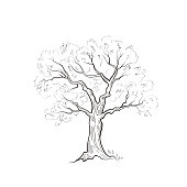 Tree with leaves isolated. Nature sign Vector sketch