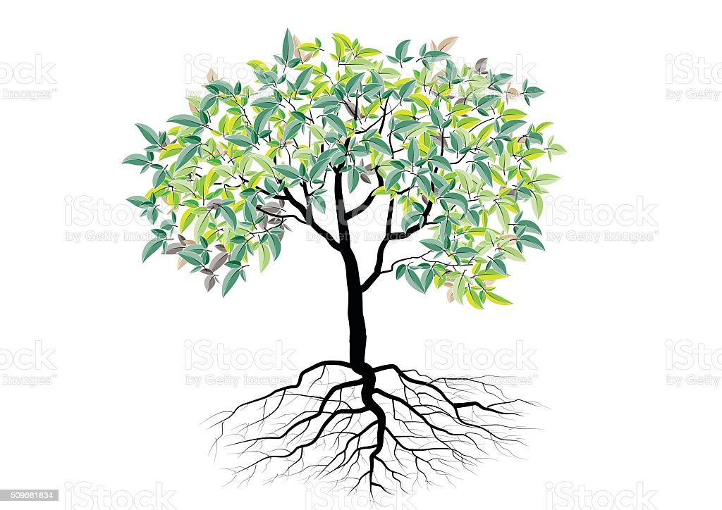 Tree With Roots Isolated Tree Vector Illustration Stock