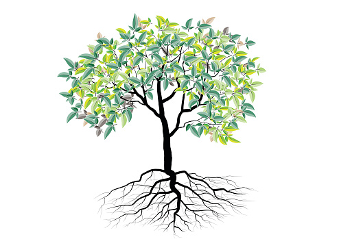 Дерево С Корнями Изолированные Дерево Векторный Рисунок ...