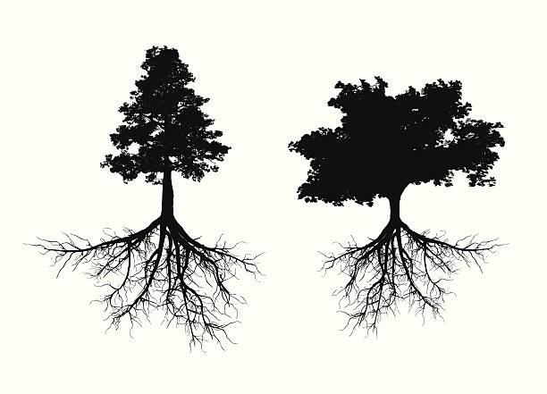 stockillustraties, clipart, cartoons en iconen met tree with roots - wortel plantdeel