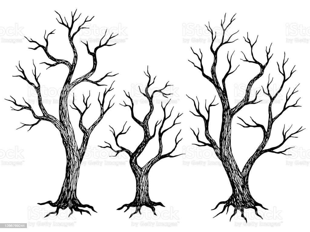 Tree Without Leaves Graphic Dead Plant Black White Isolated Sketch Illustration Vector Stock Illustration Download Image Now Istock Draw another, bigger similar layer below this one, to continue and make the tree's middle. https www istockphoto com vector tree without leaves graphic dead plant black white isolated sketch illustration gm1266769244 371450513