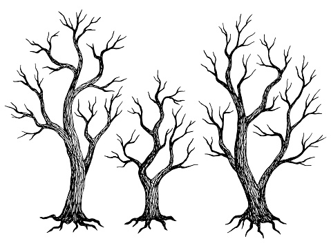 Tree without leaves graphic dead plant black white isolated sketch illustration vector