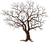 Tree without leaves isolated on white
