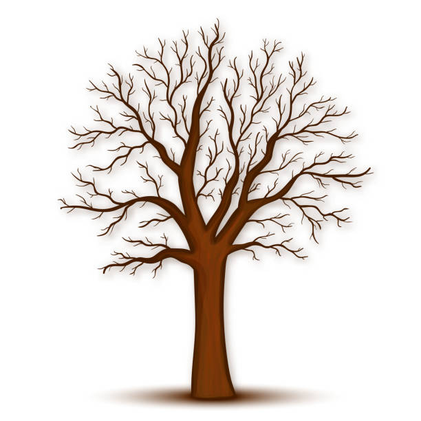 tree without leaves vector - winterruhe stock-grafiken, -clipart, -cartoons und -symbole