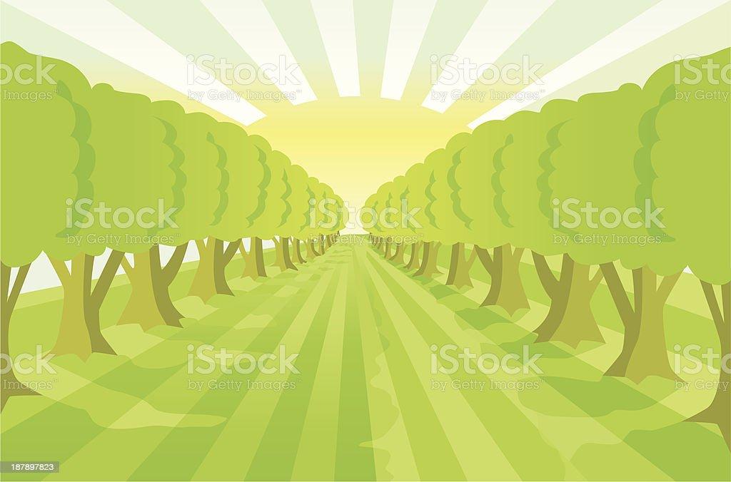 Treealley naturebackground with sunlightlines (green). royalty-free stock vector art