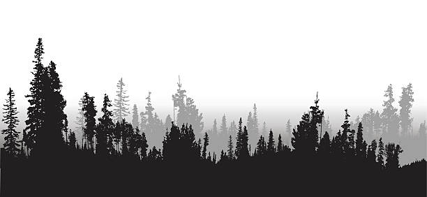 Treeline Spruce And Pines A vector silhouette illustration of a treeline of a densse forest with black prine trees in the foreground and grey trees in the background. treelined stock illustrations