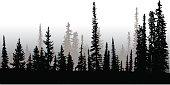Treeline Up North