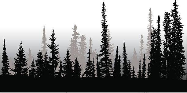 bildbanksillustrationer, clip art samt tecknat material och ikoner med treeline up north - gran