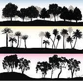vector illustration of treelines.  Three different treeline, one with leafy trees, one with palm, and the other with eucalyptus trees.
