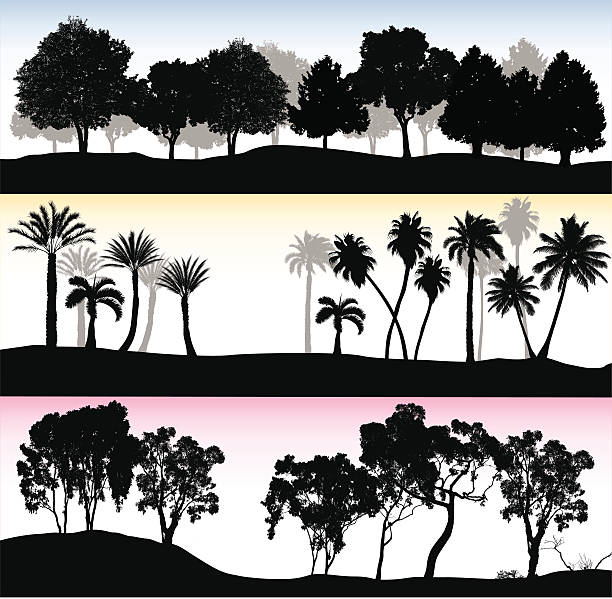 Treelines Trio vector illustration of treelines.  Three different treeline, one with leafy trees, one with palm, and the other with eucalyptus trees. treelined stock illustrations