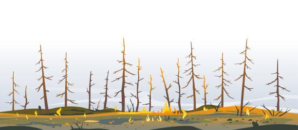 bildbanksillustrationer, clip art samt tecknat material och ikoner med träd efter skogsbrand natur illustration - skog brand