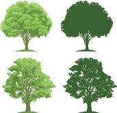 Vector illustrations of trees and their silhouettes