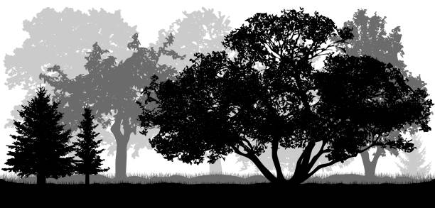 Trees background, nature, park (forest), silhouettes Trees background, nature, park (forest), silhouettes black white snow scene silhouette stock illustrations