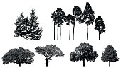 Set of realistic detailed graphic illustration of natural forest plant.