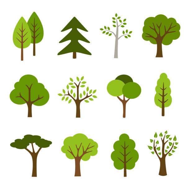 ilustraciones, imágenes clip art, dibujos animados e iconos de stock de árboles de la colección - árbol