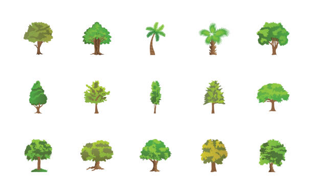 Trees Flat Vector Icons Pack These colorful flat icons represent trees. The pack has wide range of trees and greenery which are perfect to be used in related projects. cottonwood tree stock illustrations