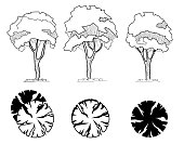 Trees for a landscape design. Different hand drawn trees isolated on white background, sketch, architectural drawing style trees set. Top and front view.
